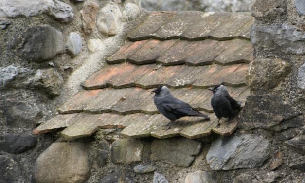 Kultur und Natur ums Schloss Hallwyl