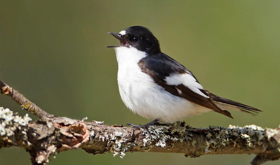 Muttertagsexkursion: Brutvögel in den Reuten